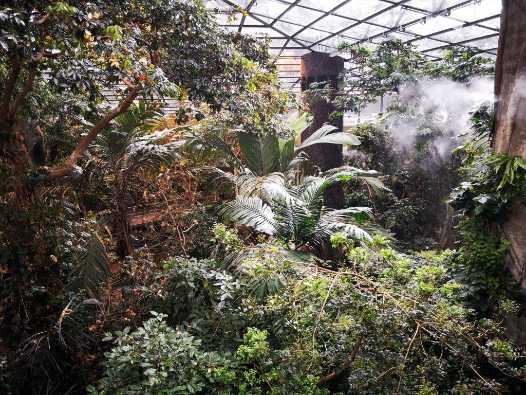 Forêt tropicale Biodôme